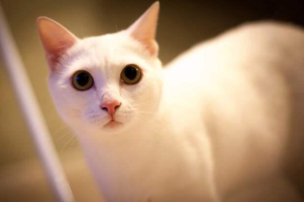 «Его просто покромсали»:кота изрезали до мяса в нижегородской ветклинике и сделали вид, что ничего не случилось