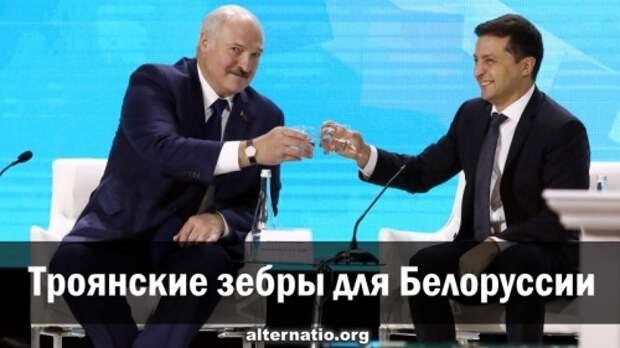 Троянские зебры для Белоруссии