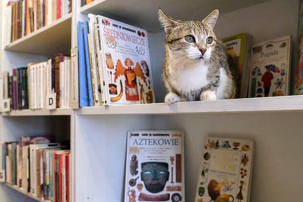 В России выбрали лучшую служебную кошку