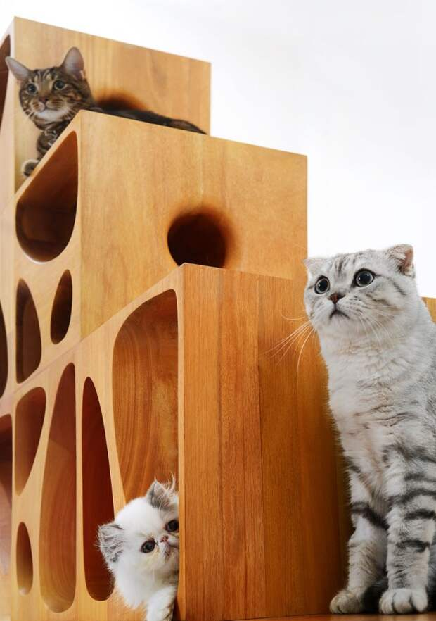 Домик для кошки: как и из чего можно сделать (43 фото)