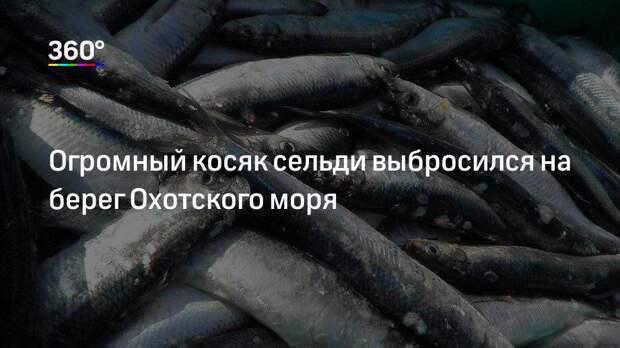 Огромный косяк сельди выбросился на берег Охотского моря