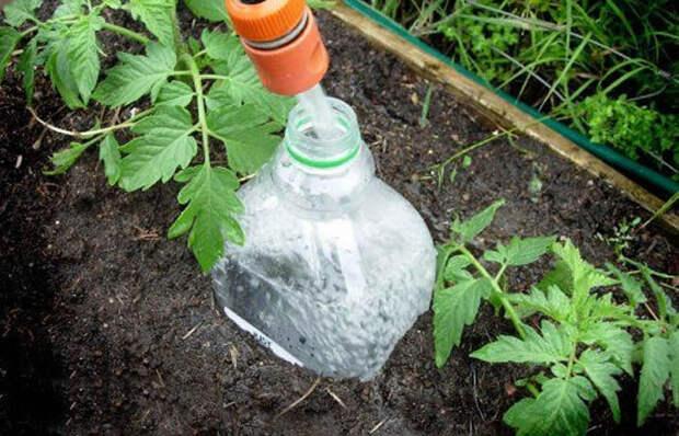 Как из обычной пластиковой бутылки сделать «умную» систему полива для грядок
