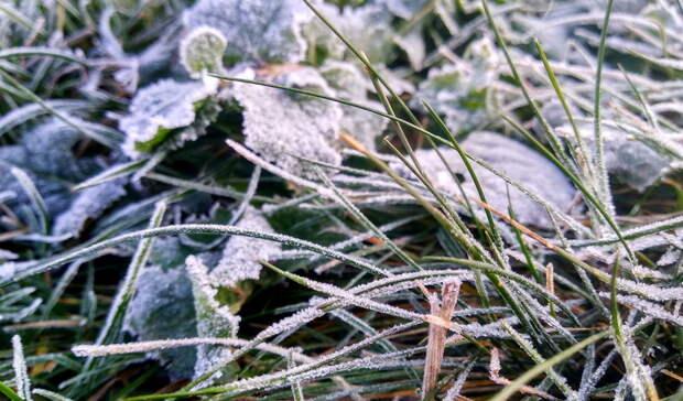 До пяти градусов мороза похолодает в Волгоградской области