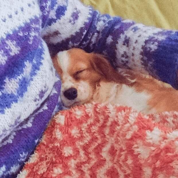 Девушка бросила престижную работу и поселилась в лесу, чтобы ухаживать за больными собаками