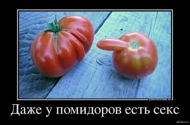 Влияние помидор на секс....
