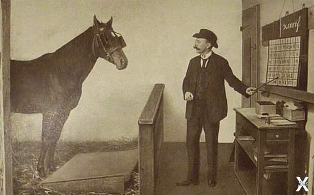 Тестирование Ганса, 1904 г....