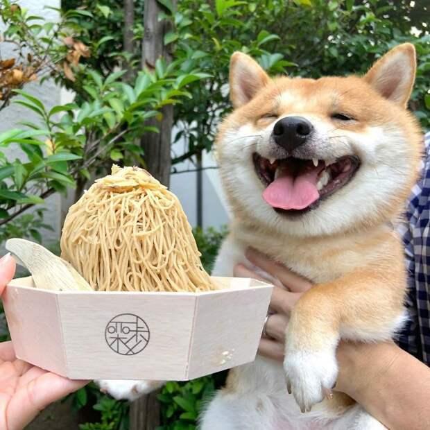 В Японии живет щенок с самой очаровательной улыбкой в мире!