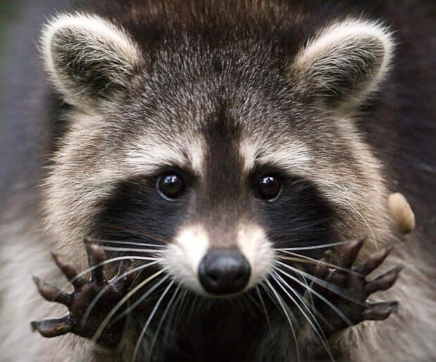 6 опасных животных, которых мы считаем милыми