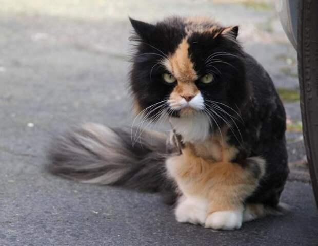 15 кошказлюк, претендующих на титул «Бестии года»