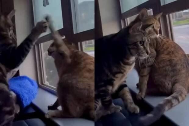 «Что случилось?»: прервавшие драку из-за шума наулице коты рассмешили Сеть