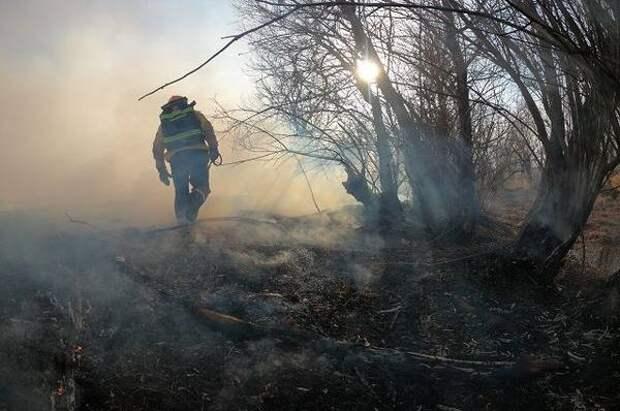 На заповедных территориях Камчатки сформированы 9 лесопожарных команд