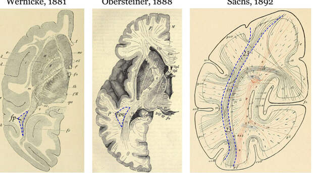 5 неизвестных частей человеческого тела, которые раньше эскулапы не замечали