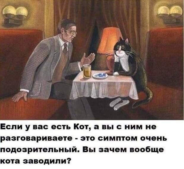 На изображении может находиться: 1 человек, сидит, текст «если y вас есть кот, a вы с ним не разговариваете это симптом очень подозрительный. вы зачем вообще кота заводили?»