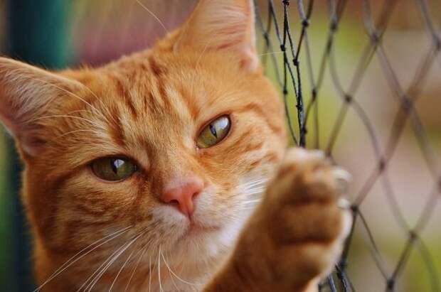 Держателям домашних животных грозит крупный штраф – придется нанимать питомцам сиделку