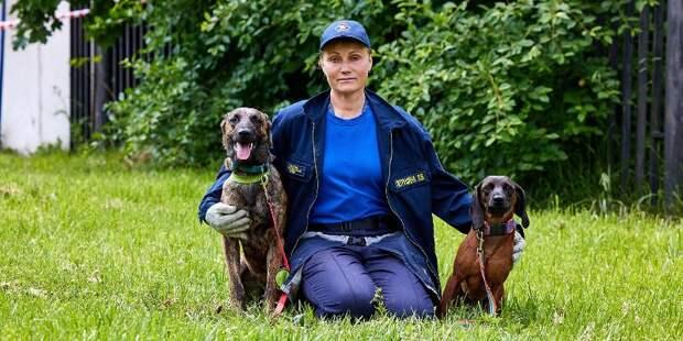Бесценный опыт: столичные кинологи о том, как научить собаку спасению