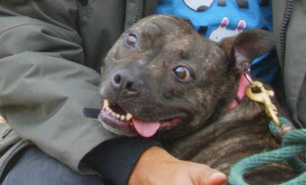 Собака находилась в приюте 6 лет, а потом ее решили забрать. Мужчина снял реа...