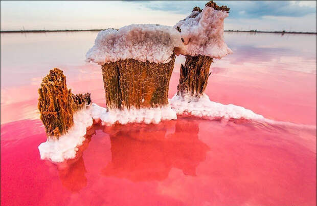 В Сивашском заливе насчитывается около 200 миллионов тонн соли.  Фото: Сергей Анашкевич.