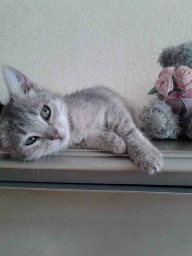 Два больных котенка тряслись от холода и голода под остановкой котенок, полосатый котенок, серый котенок