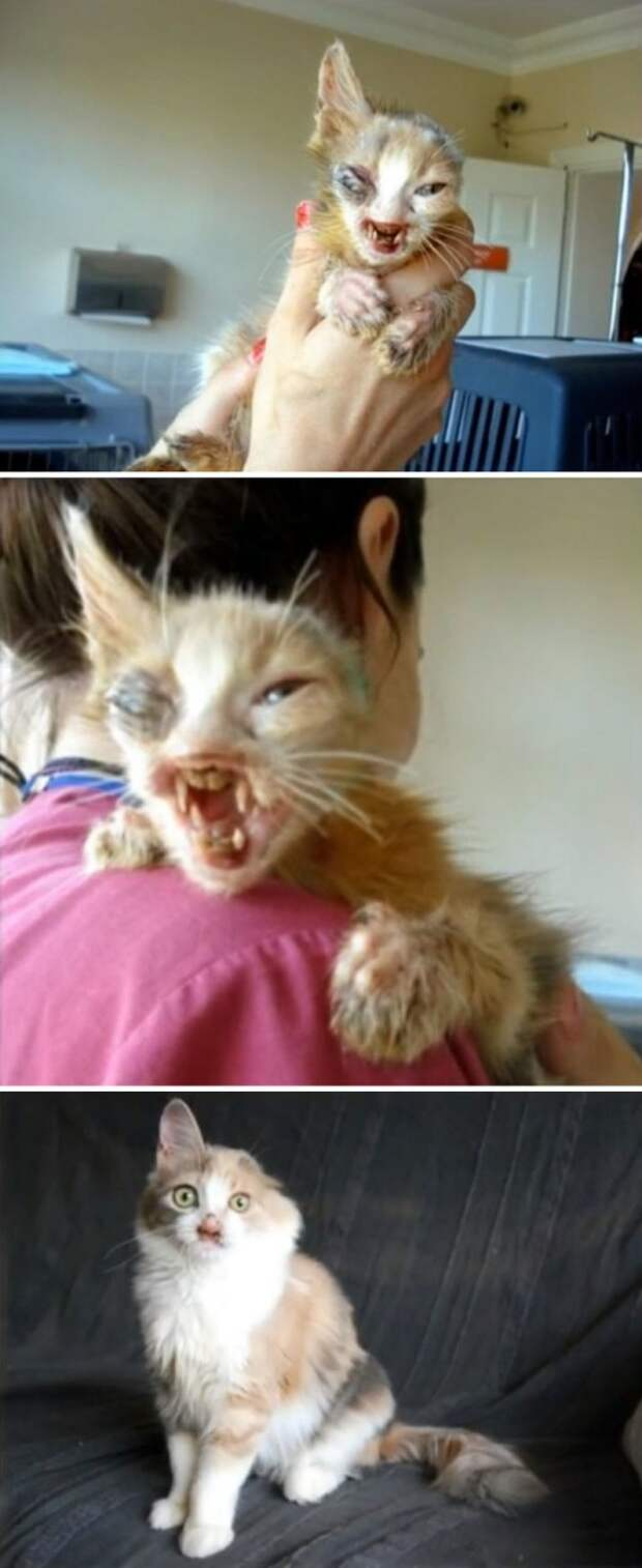 Взрослые боялись даже приблизиться к этой ужасного вида кошке. Но семилетняя девочка спасла ее Счастливый конец, животные, спасение