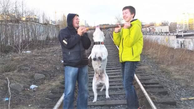 Про собак и двух баранов