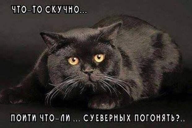 Смешные и веселые картинки с надписями со смыслом (11 фото)