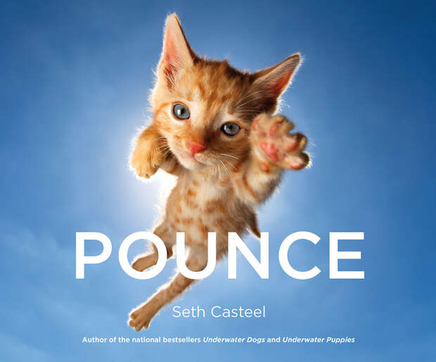 Прыгучие котята от фотографа Сета Кастила, которые поднимут настроение кому угодно