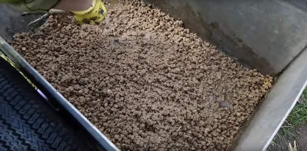 Кошачий наполнитель на грядках заметно улучшит урожай