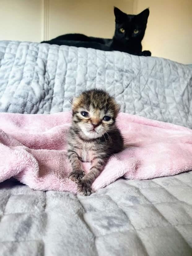 Котенок, весом 71 грамм, отчаянно боролся за жизнь и в этом ему помогла четвероногая спасительница