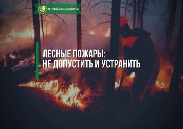 Лесные пожары: не допустить и устранить