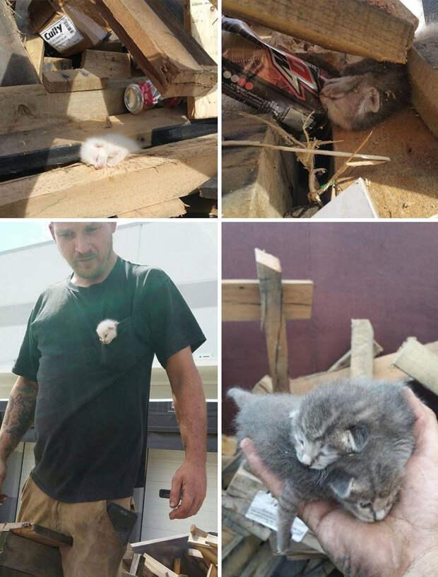 Мужчина, услышав отчаянное мяуканье котенка, мужчинв семь часов выкапывал животное и Счастливый конец, животные, спасение