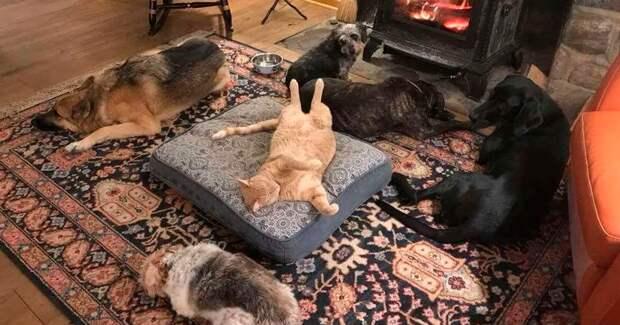 50 смешных фото грустных собак, которых коты изгнали с ихмест