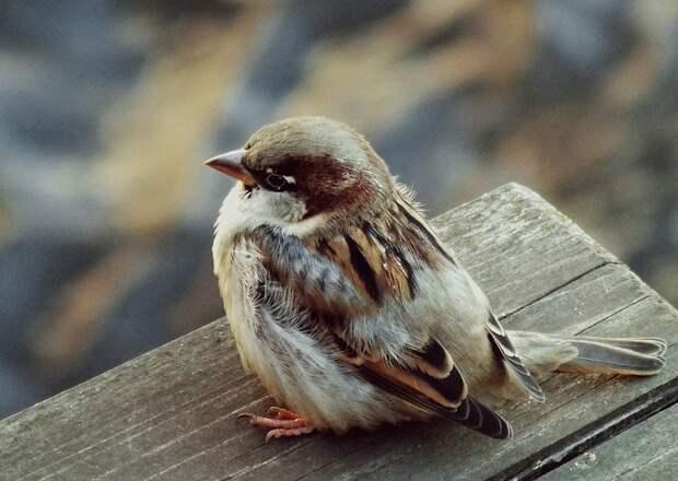Тест: Много ли птиц вы знаете?
