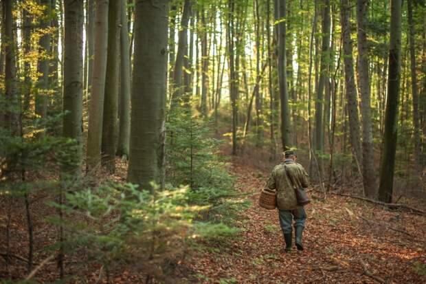 лисички лес