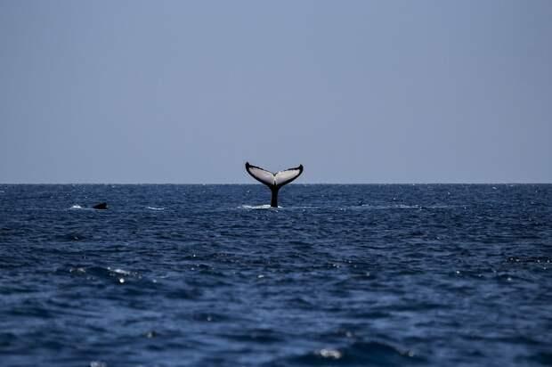 «Наблюдать за китами»: Шойгу рассказал о лучших местах для отдыха в России