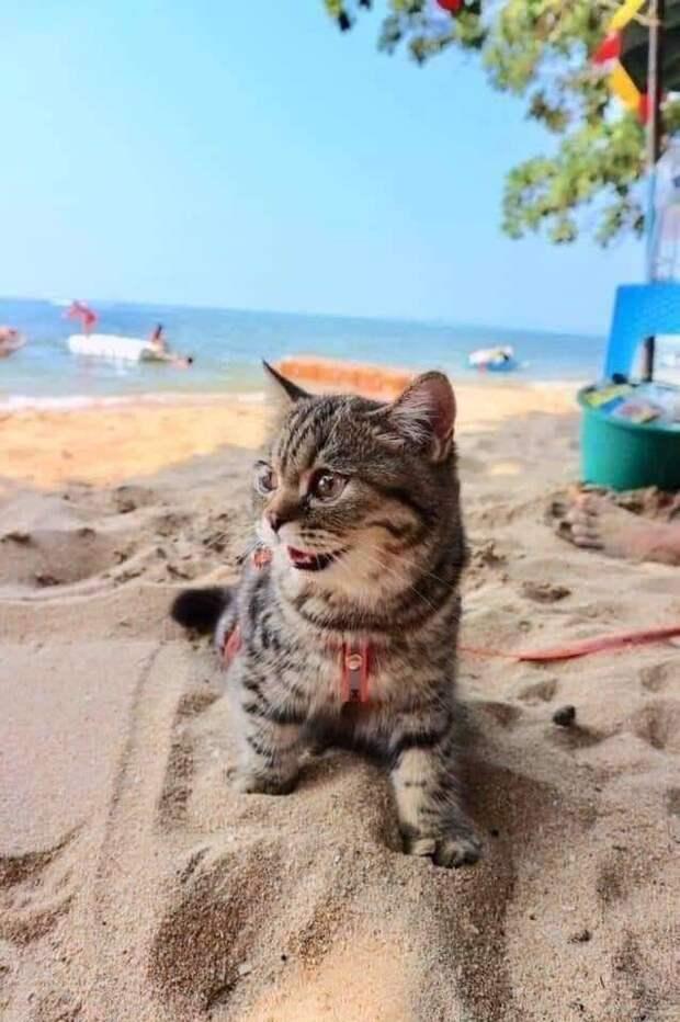 Зарываясь лапками в тёплый песок, кошечка улыбалась от счастья. Нам стоило бы у неё поучиться!