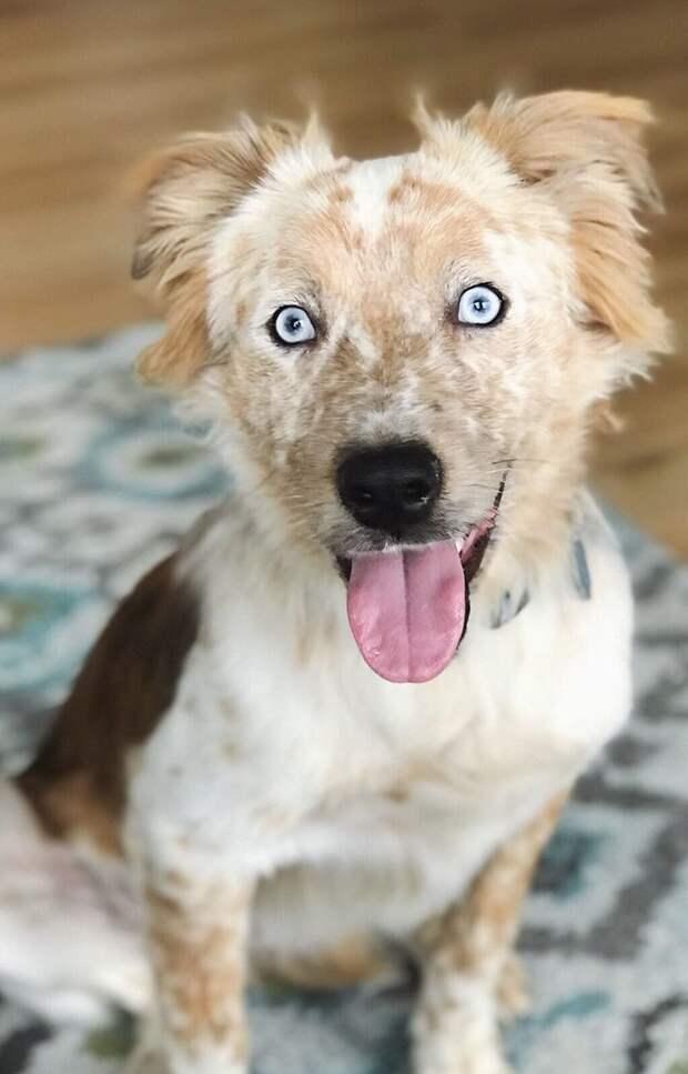 Эти пронзительные голубые глаза и лучезарная улыбка очаровывают всех вокруг девушка, день рождения, животные, история, пес, приют, фото