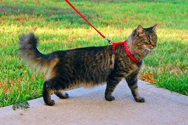 Россияне начали активнее гулять с кошками
