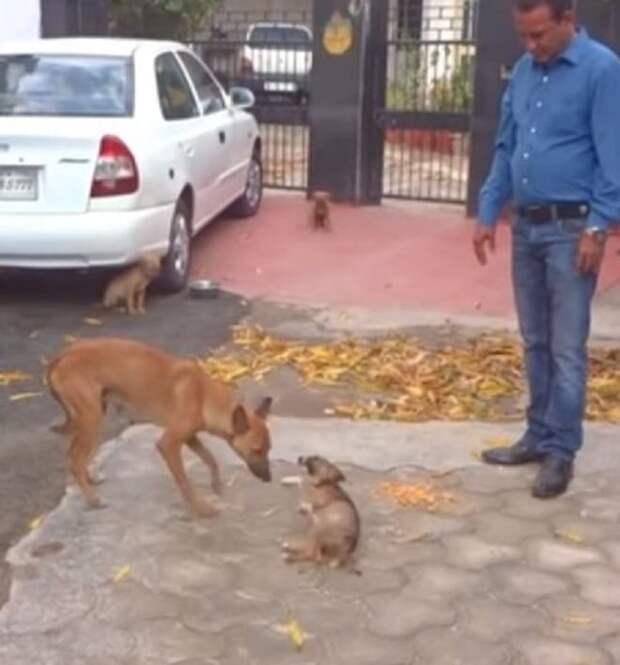 Щенок и собака