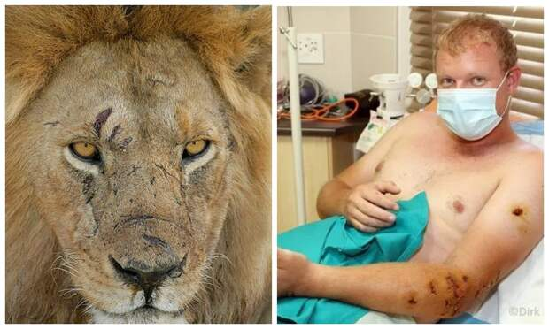 Неравная схватка: исследователь дикой природы выжил после нападения голодного льва вБотсване