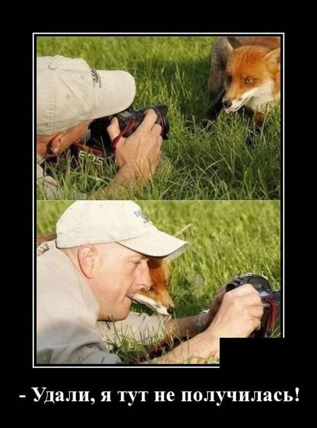 Демотиватор про лисицу
