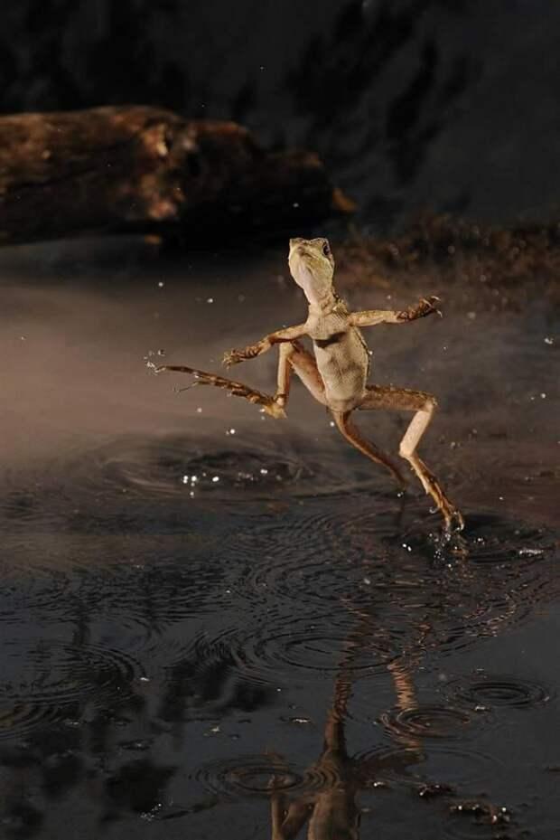 Бегающие по воде