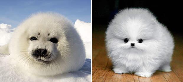 13.  животные, собака, сходство, тюлень