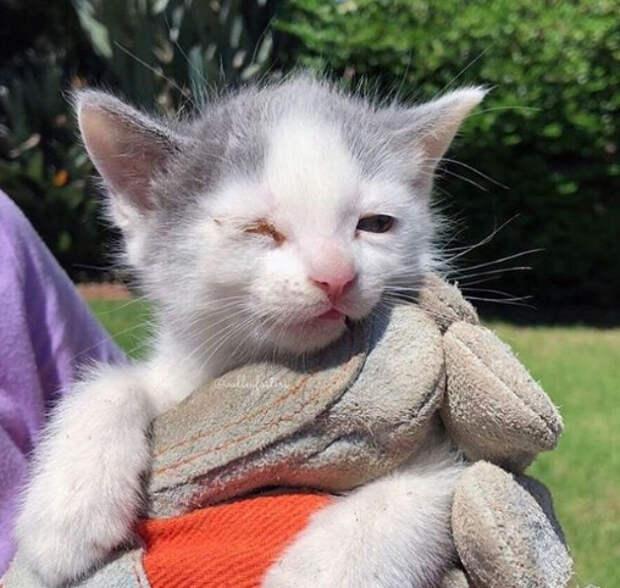 Мужчина кормил котов и услышал, как кто-то плачет! 3 малыша тоже нуждались в помощи!