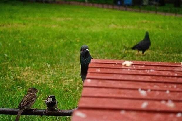 Смешная мини-история о голубе, который «прощелкал» свое счастье