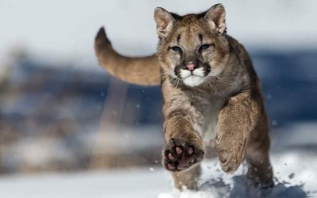 15 небанальных фактов о животных. Об этом обычно умалчивают в энциклопедиях