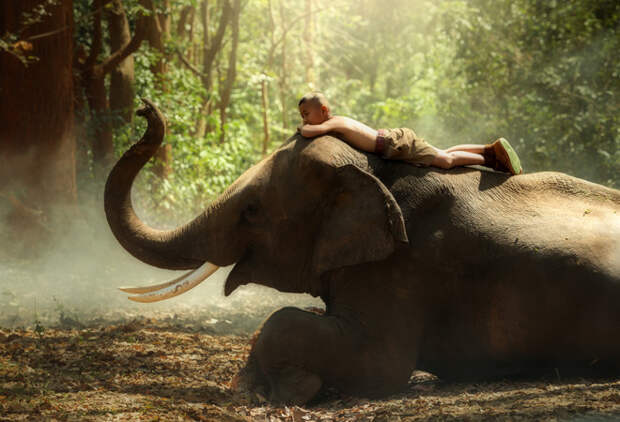 Всемирный день слонов: самые яркие и красивые фотографии