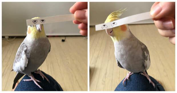 Строим глазки! Бумажная полоска поднимает настроение попугаю иего хозяевам