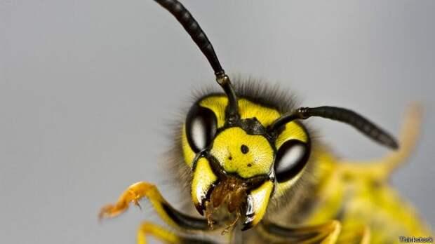 Аллергия на насекомых