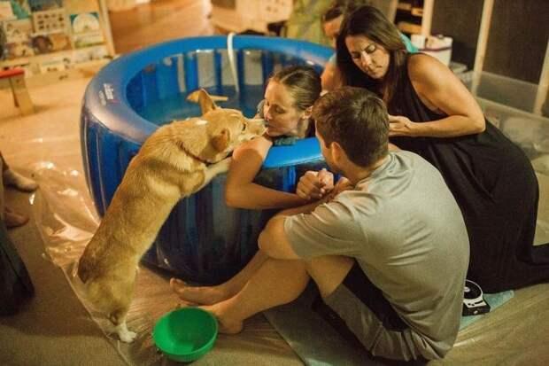 Пёс поддерживал свою хозяйку во время родов, словно человек