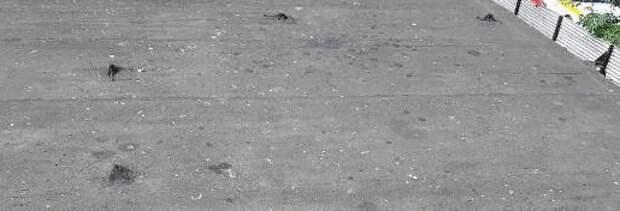 Козырек подъезда очистили от мусора в доме на Новомарьинской